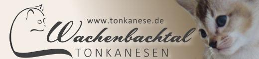 wachenbachtal_banner01